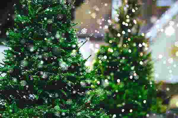 Weihnachtsbaumschlagen Bremen, die Weihnachtsfeier in Bremen, Weihnachtsfeier, Weihnachtsevent in Bremen, Weihnachtsfeier Bremen, Weihnachtsfeier Bremen, Firmenevents, Firmenevent in Bremen