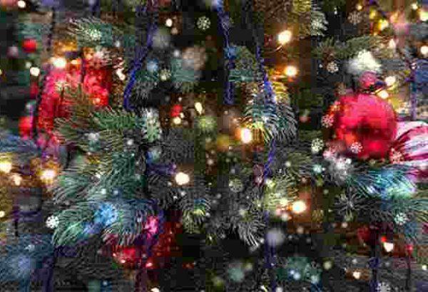 Weihnachtsbaumschlagen Hamburg, die Weihnachtsfeier in Hamburg, Weihnachtsfeier, Weihnachtsevent in Hamburg, Weihnachtsfeier Hamburg, Weihnachtsfeier Hamburg, Firmenevents, Firmenevent in Hamburg