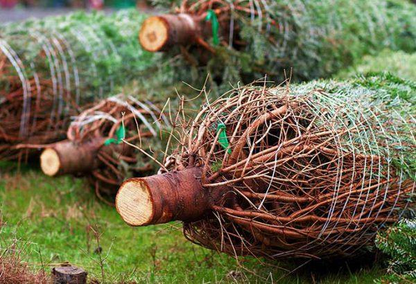 Weihnachtsbaumschlagen, die Weihnachtsfeier in Berlin, Weihnachtsfeier, Weihnachtsevent in Berlin, Weihnachtsfeier München, Weihnachtsfeier, Firmenevents, Firmenevent