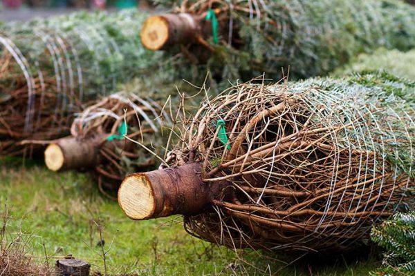 Weihnachtsbaumschlagen, die Weihnachtsfeier, Weihnachtsfeier, Weihnachtsevent, Weihnachtsfeier, Weihnachtsfeier, Firmenevents, Firmenevent