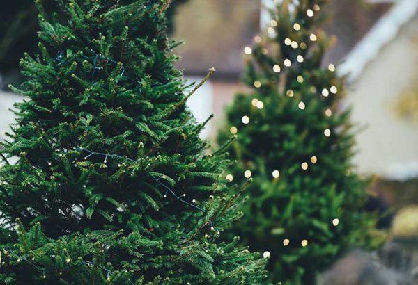 Weihnachtsbaumschlagen in Leipzig, die Weihnachtsfeier in Leipzig, Weihnachtsfeier, Weihnachtsevent in Leipzig, Weihnachtsfeier Leipzig, Weihnachtsfeier Leipzig, Firmenevents, Firmenevent in Leipzig