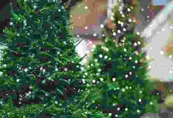 Weihnachtsbaumschlagen in München, die Weihnachtsfeier in München, Weihnachtsfeier München, Weihnachtsevent in Berlin, Weihnachtsfeier München, Weihnachtsfeier München